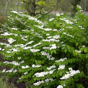 Bend Oregon S Best Tree Nursery