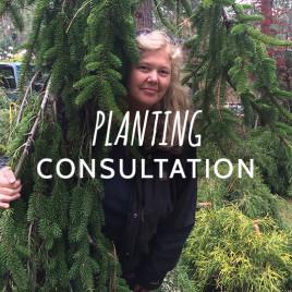 Planting Consultation